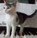 Katzen-Kuscheltiere-Spieluhren-und mehr
