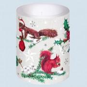 Designserie Eichhörnchen