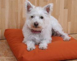 mudis Hundebett, Hundekissen - Baumwolle, Bio - S